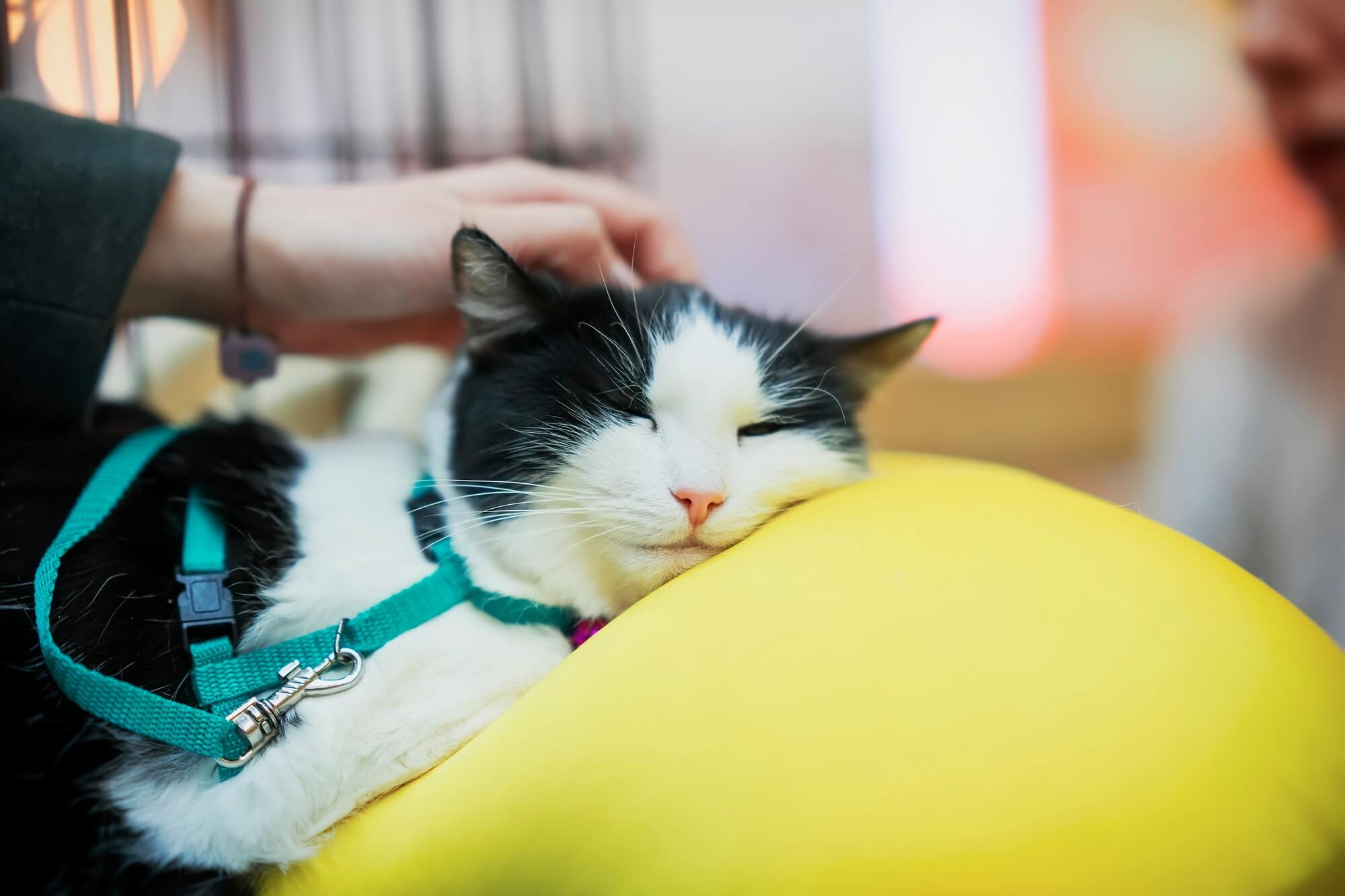 Sad cat lying on big yellow pillow in cage waiting for treatment of veterinary clinic