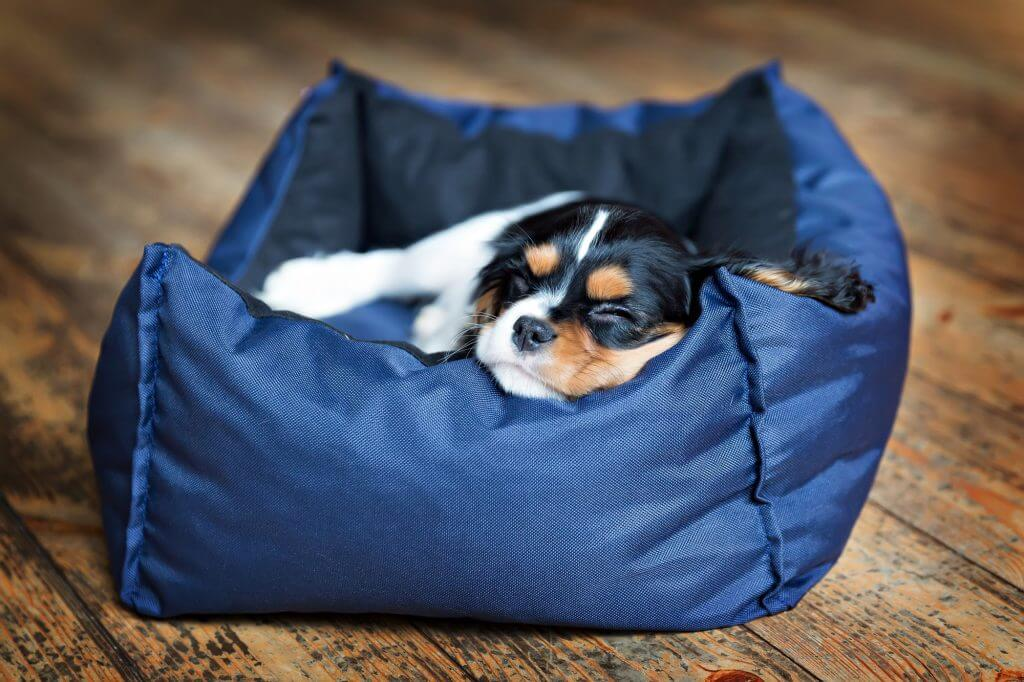 puppy sleeping in a bed